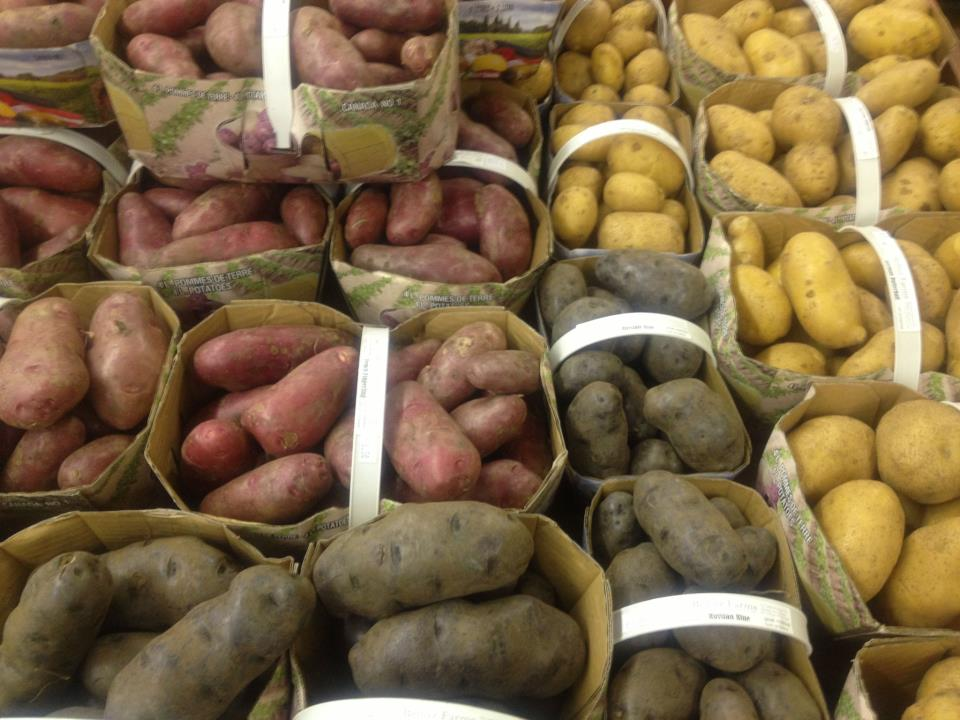 Quart baskets of local yellow, red and purple potatoes.