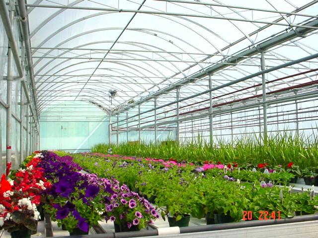 Intérieur d'une grande serre avec des plantes à massif de différentes couleurs.