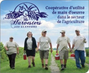 The Harvesters/Les Glaneurs